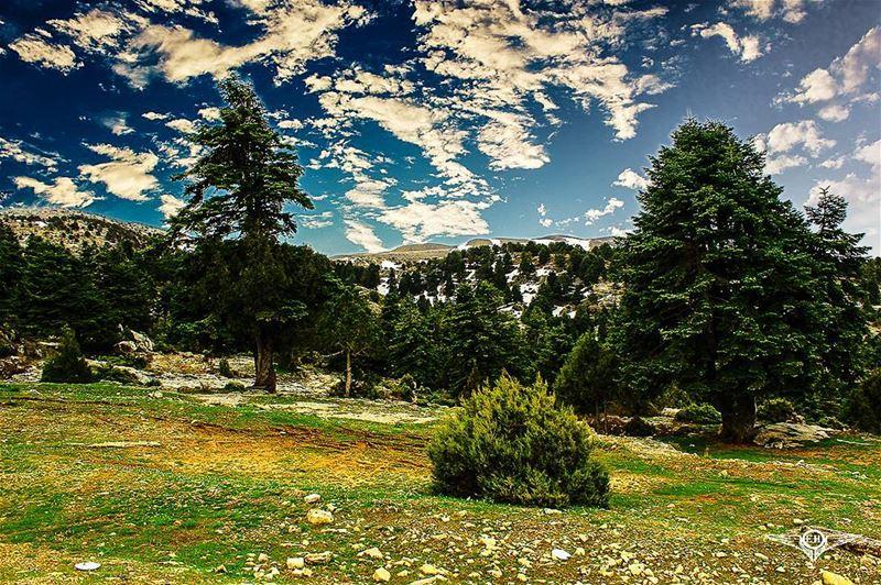 The view at Arz El Chouh PHOTOARENA Fatalaframes MoodyGrams landscape...