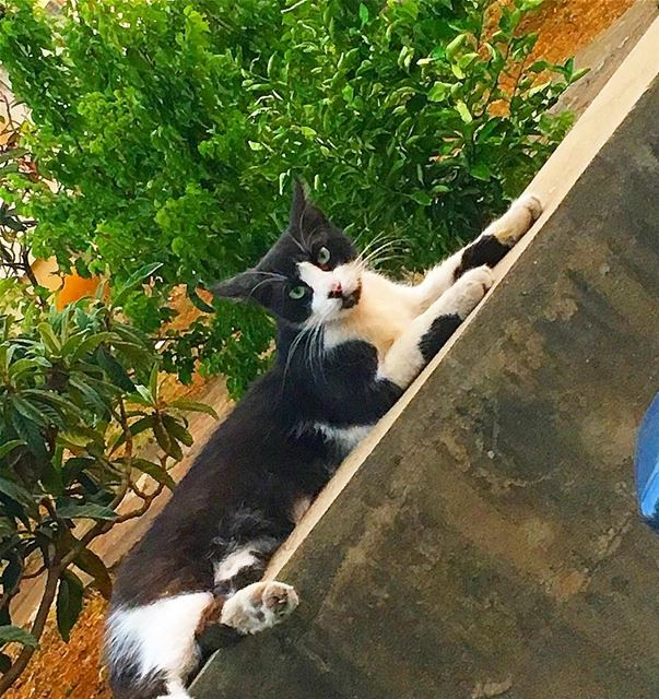 🤔-- summer beirut lebanon weekend instagram cat art happy... (Beirut, Lebanon)