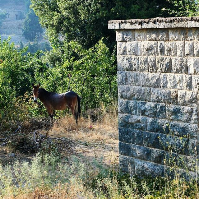 We promiss a very rural trip to MaaserElChouf Sunday Aug 20For...