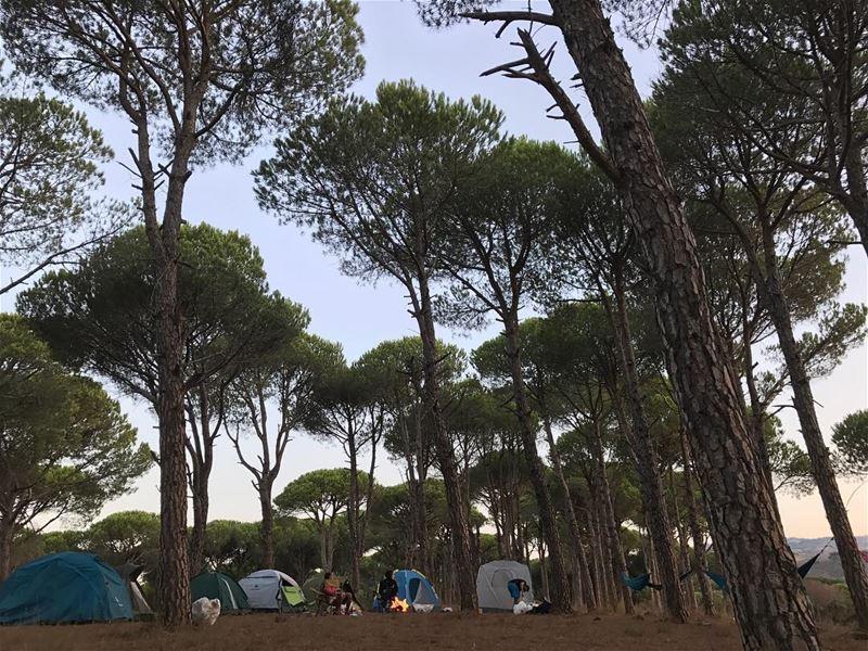~..When you hug a bunch of Trees..~ 🏕🌳🌹 lustforlife thewayyouread ... (Aïchiye, Al Janub, Lebanon)