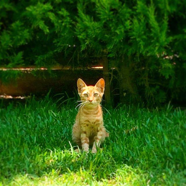Hello everyone 👋 hellokitty hello nature naturephotography kitten ...