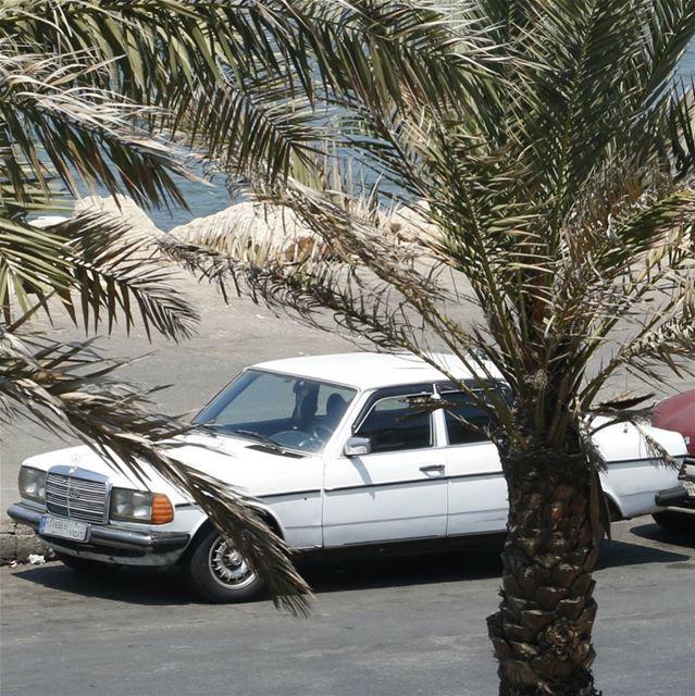 White Lebanese Boy in Tripoli... white lebanese vintage classic ... (Tripoli, Lebanon)