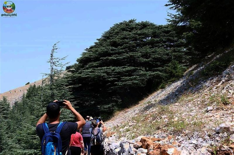 From our last trip to maaserelchouf , when we got to see the Cedar tree...