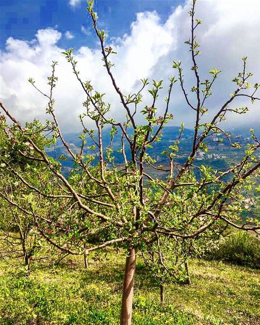 📷🇱🇧⛰🌿🍃🌿🍃⛰ 🇱🇧📷 April, 2017 nature naturephotography history... (Bcharré, Liban-Nord, Lebanon)