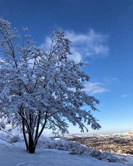 White Christmas ❄️ (Faraya, Mont-Liban, Lebanon)