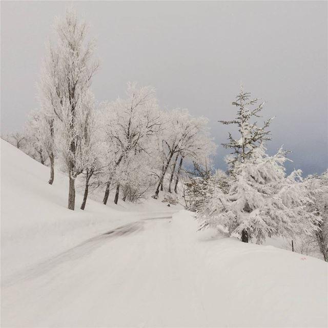 Page 1 of 365 ❄... CedarsofGod Bcharre Lebanon Storm snow ... (El Arz)