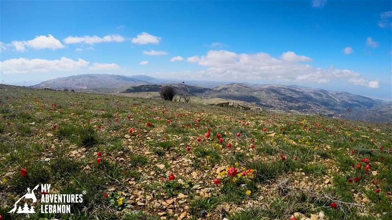 🌸🌹🌼🍃Join us for a hike in Falougha on April 8🚶For more details check...