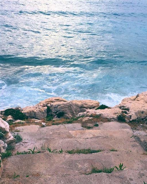 Don't follow me , i don't know where i'm going 🤣 sealife sealovers ... (Lebanon)