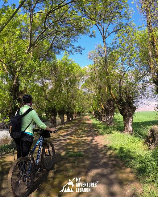 🌲🚴🌲 myadventureslebanon lebanon nature biking naturelove ...
