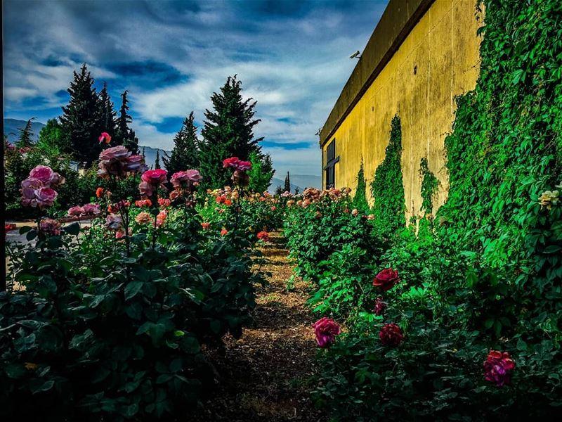 PHOTOARENA Fatalaframes MoodyGrams landscape pocket_allnature ... (Château Kefraya)