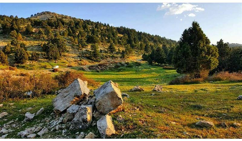 🌳 By @sayedfares--------------------------------------------------------- (Al Qubayyat, Liban-Nord, Lebanon)