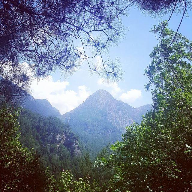 hikingaloneisawesome hikelebanon bestofleb bestmoments bestseaview ... (Jabal Moussa Biosphere Reserve)