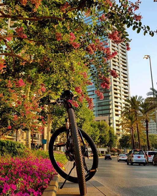 What do you need more.. grateful🚲🌺🍃🍃 today everyday beirut july... (Zaitunay Bay)