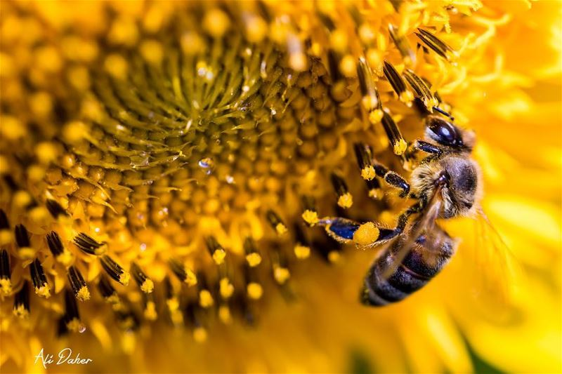 Back to macro 🐝.... bee beephotography nature insects...