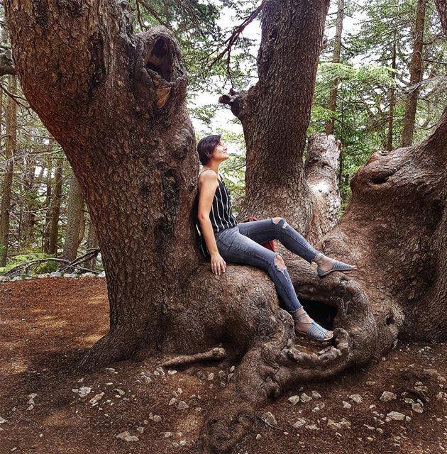 Peace of Mind 🌳🍃 TheUrbanPotato.... lebanon urbanlebanon chouf ... (Barouk Cedars)