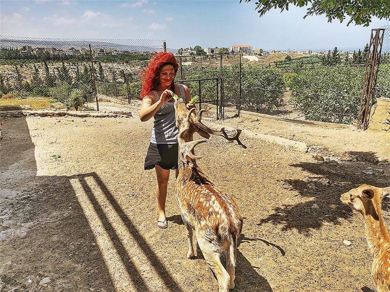 | Happy morning | tyr sour deers feedingtime relax lebanon ... (Al-Yasmine Guesthouse)