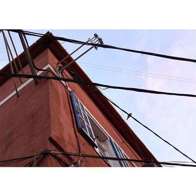 chaos powerful lines bird meditation lookingup fujifilmlebanon ...