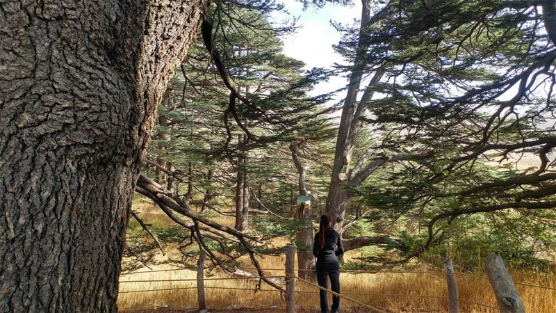 A tourist in this world 🍃🌲 mountaineering choosemountains ... (Cedars of God)