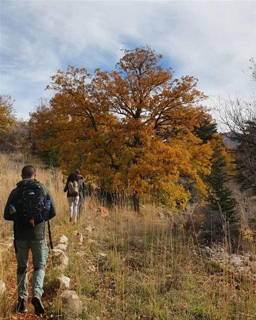Enjoying the last bits of Autumn 🍂🍁 myadventureslebanon... (Arz Tannoûrîne)