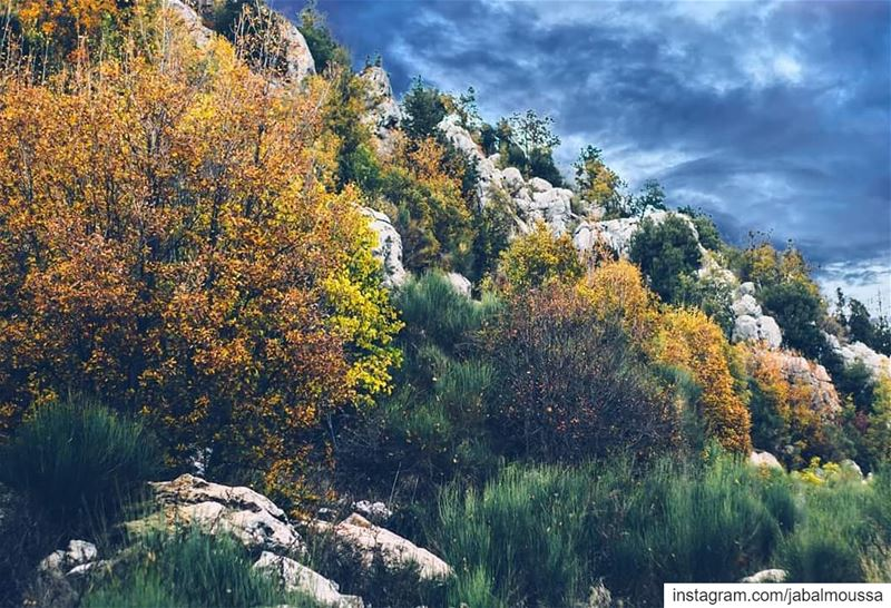 Wishing you all a Blessed 2019 from all of us at APJM. JabalMoussa ... (Jabal Moussa Biosphere Reserve)