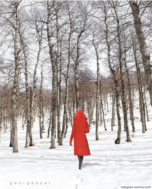 Into the woods by @georgesper--------------------------------------------- (Akkar)