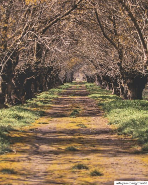 """A walk in nature walks the soul back home."" - Mary Davis. discoverearth ... (Lebanon)"