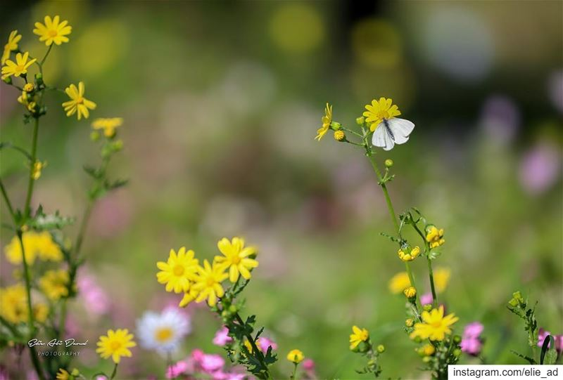 Hello Spring 🌸 spring march flowers bee butterflies color colour ... (Beithabbak)