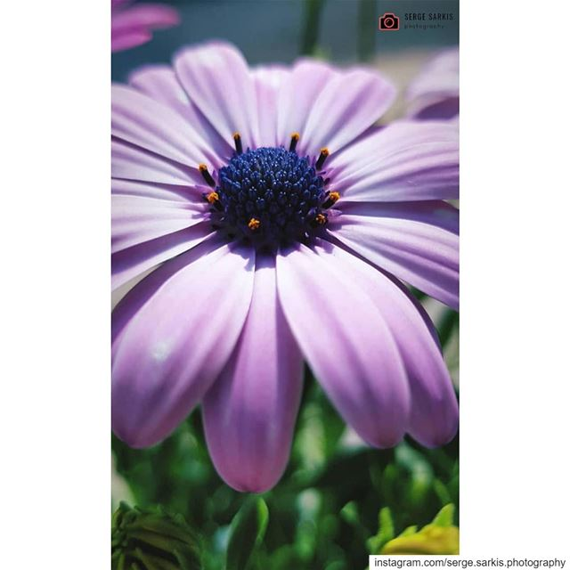 🌸🌸.. sergesarkisphotography photographer photography photo rose ...