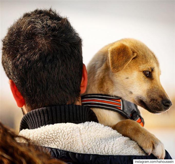 Carrying his baby . perro dog friends ... (Faraya, Mont-Liban, Lebanon)