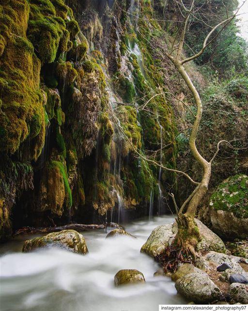 A tropical journey🏞️🌿.. lebanon waterfall river longexposure ... (Lebanon)