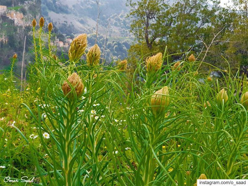 Hello Spring spring field outdooradventures green mountains lebanon ...