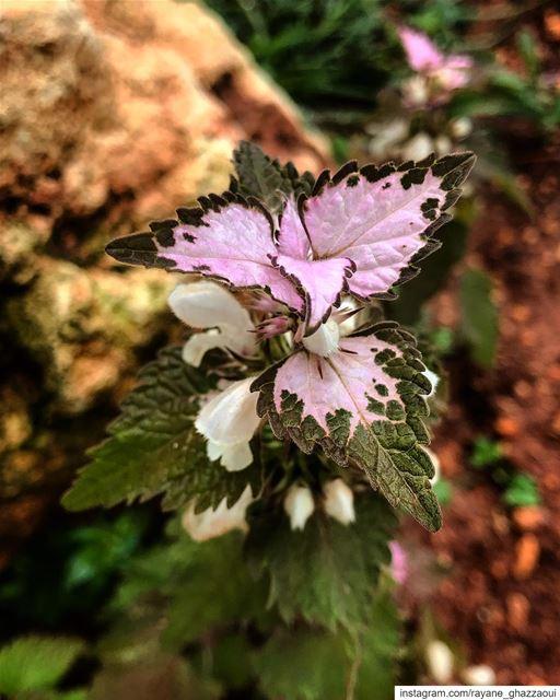 natureoftheplanet1 proudlylebanese lebanoninapicture yourlifeoutdoors ...