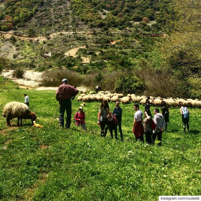 Witnessing the birth of a baby sheep 😍🐑☀️Today's hike at Nahr Al Joz .... (Batroûn)