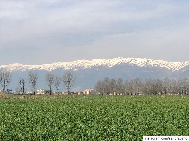 """""""Find more reasons to be grateful than to complain""""........... (Bekaa Valley)"""