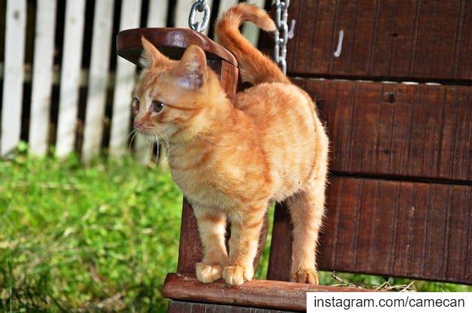 cat kitten cute lebanon animallovers animals pet picoftheday ...