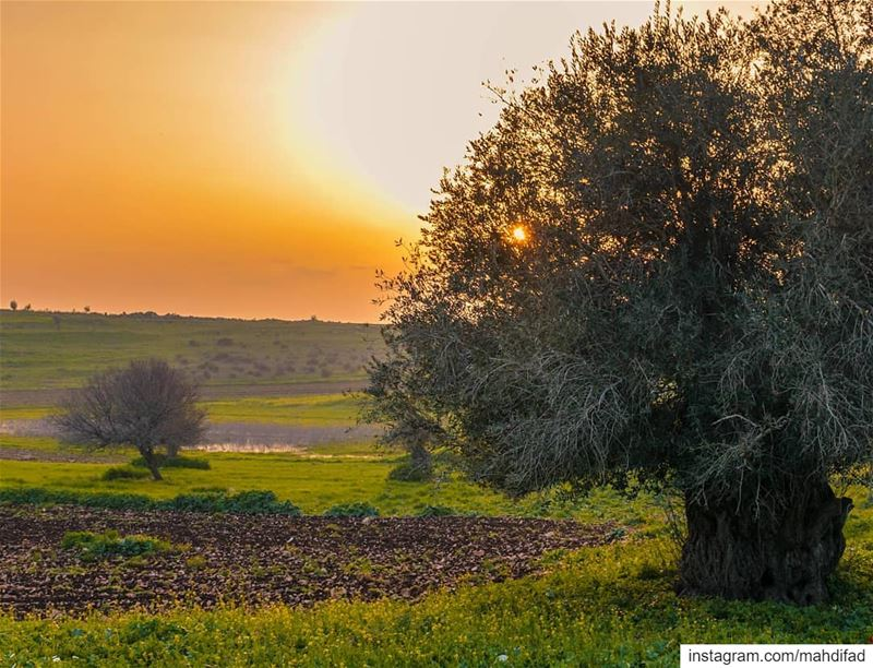 🌅🌅............. Sunset pysglb sunshine nabatieh southern... (Deïr Siriân, Al Janub, Lebanon)