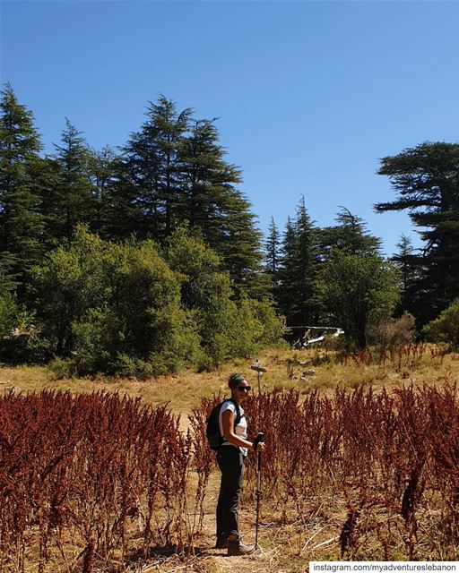 Hiking in paradise 🗺🧭 myadventureslebanon mountains hiking ... (Horsh Ehden Nature Reserve)