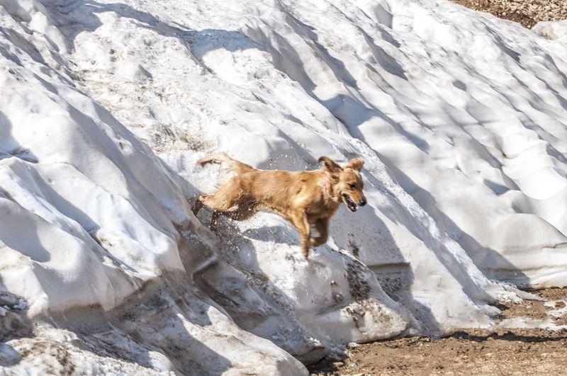 Bella Jumping on Snow (Black Peak)