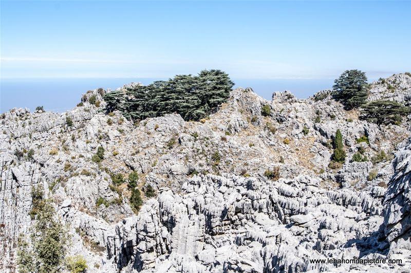 Video: Arz Jaj Hike - The Cedars of Jaj Hike