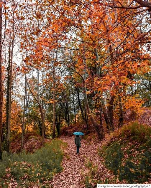 Autumn Walk 🍂⛈ - Let's breathe some fresh air and enjoy the smell of the... (Mayruba, Mont-Liban, Lebanon)