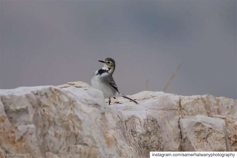 From yesterday birdphotography Session a beautiful encounter with a the ...