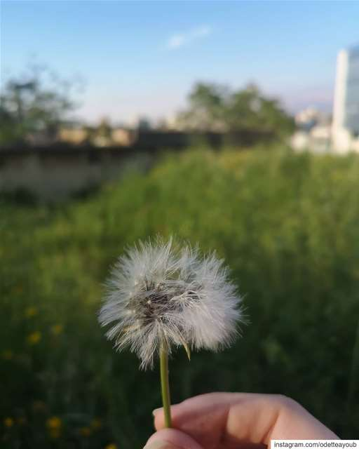 Close your eyes and make a wish...