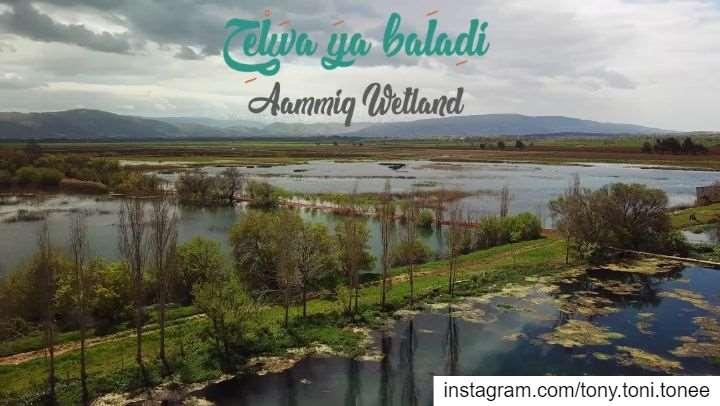 7elwa Ya Baladi (Beautiful Lebanon) - Ammiq Wetland / Bekaa... (Aammiq, Béqaa, Lebanon)