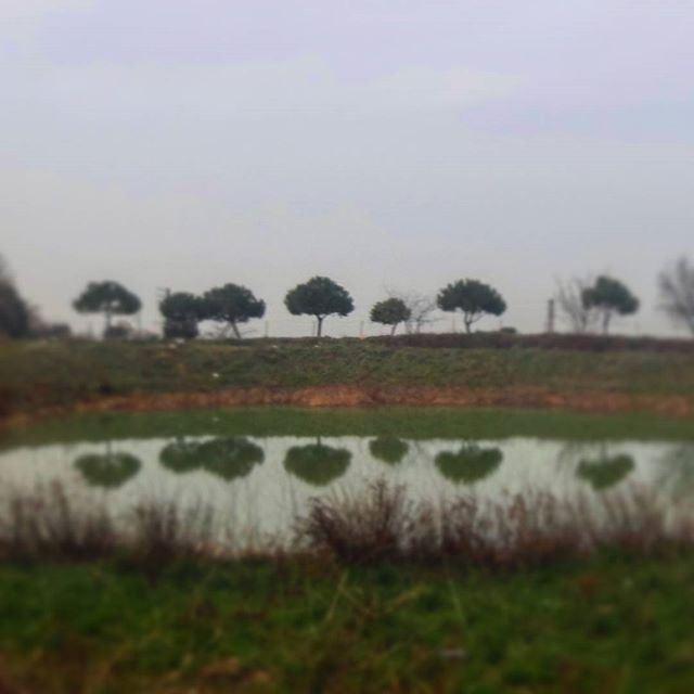 beautifulnature treestyle reflection lake lac verdure wintertime