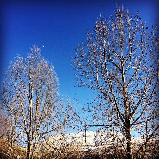 deep blue sky winter time snowy mountains trees Faraya Lebanon...