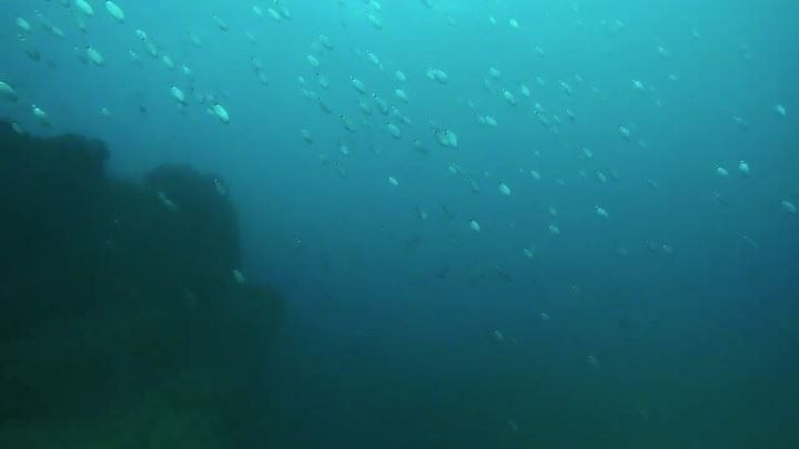 Call of hope...an  underwater  videography of our  lebanese  blue  water...