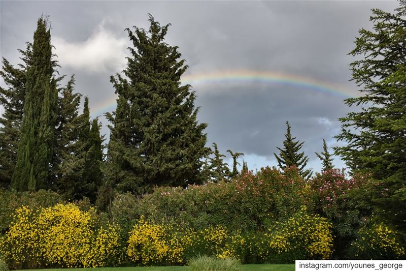 The colors of a garden under the colors of a rainbow beautiful  hazy ...
